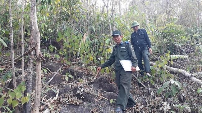 Bảo vệ môi trường thời 4.0 (Phần 2): Nỗi trăn trở về những cánh rừng