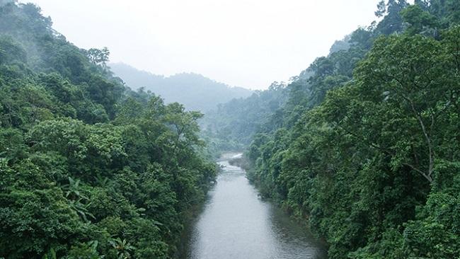 22 triệu USD bảo vệ rừng ven biển Quảng Bình