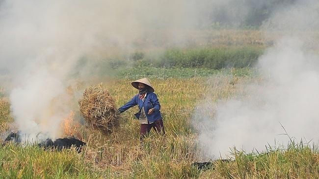 Biến rơm rạ thành đầu vào cho nông nghiệp tuần hoàn