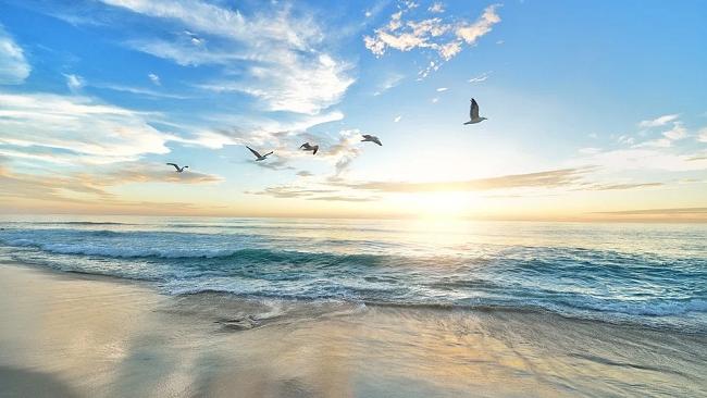 Bảo vệ đại dương vì sự sống và sinh kế