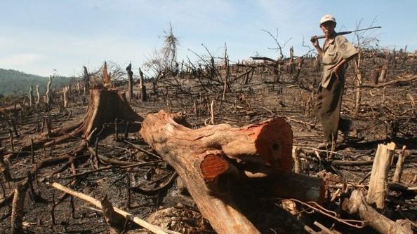 WWF kêu gọi các ngân hàng Đông Nam Á tăng cường chính sách môi trường