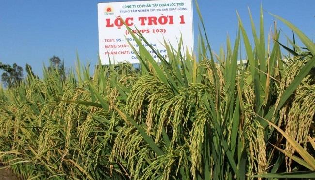 Xu hướng nông nghiệp sạch thu hẹp lợi nhuận của Lộc Trời