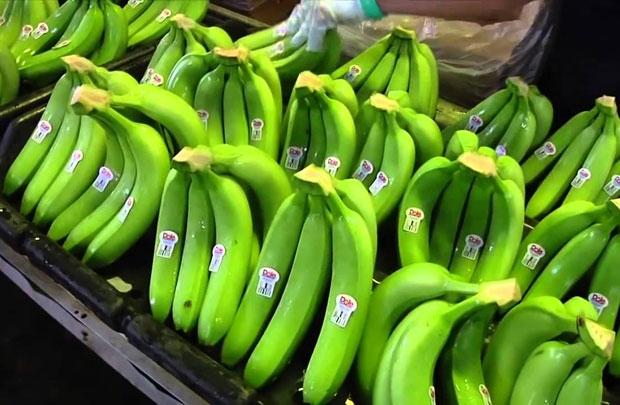 Hoàng Anh Gia Lai dự kiến thu 4.400 tỷ đồng từ cây ăn trái