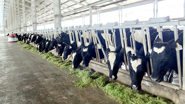 Vinamilk ra mắt các sản phẩm sữa A2 đầu tiên tại Việt Nam