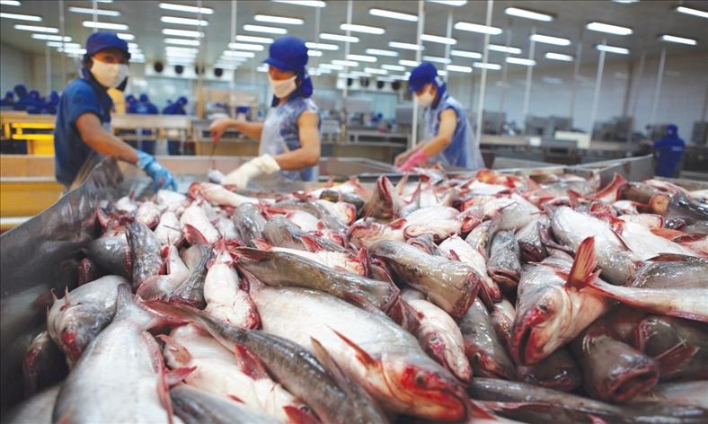 Việt Nam đệ đơn khiếu nại WTO về việc Mỹ hạn chế nhập khẩu cá tra, cá basa
