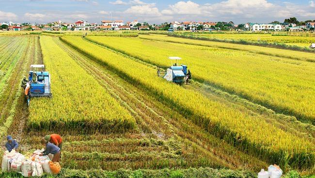 Thu nhập bình quân năm 2020 ở nông thôn sẽ tăng lên 44 triệu đồng