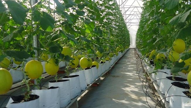 Đề xuất nhiều chính sách khuyến khích đầu tư vào nông nghiệp