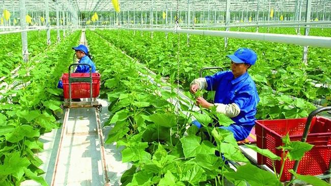 Chi phí logistics đắt đỏ khiến nông nghiệp gặp khó
