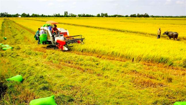 Giải bài toán lãng phí đất nông nghiệp