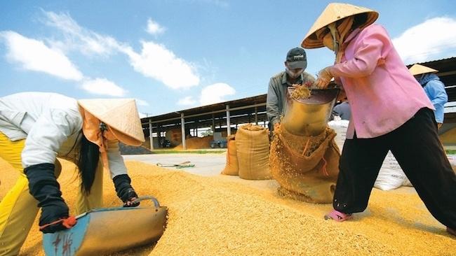 Xuất khẩu gạo Việt Nam thắng lớn