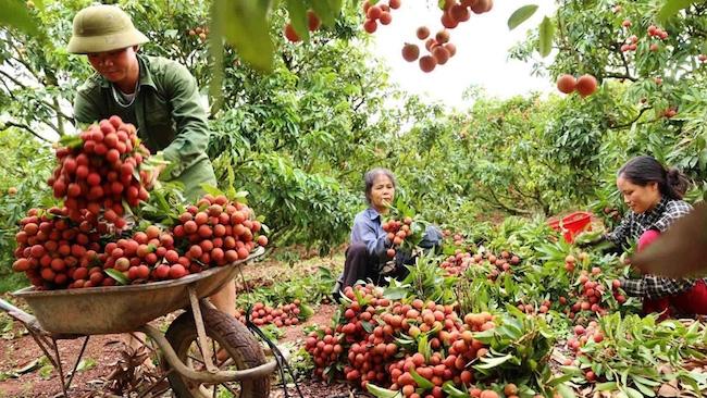 Bộ Công thương vào cuộc hỗ trợ Bắc Giang tiêu thụ nông sản trong tâm dịch