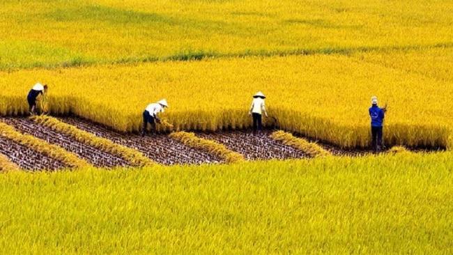 HSBC: Nợ công của Việt Nam khó vượt ngưỡng 65% GDP