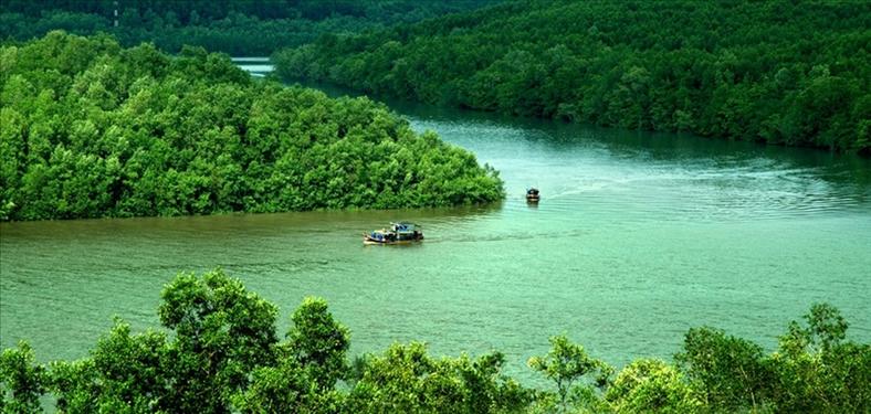 Cà Mau: Gian nan giữ rừng ngập mặn