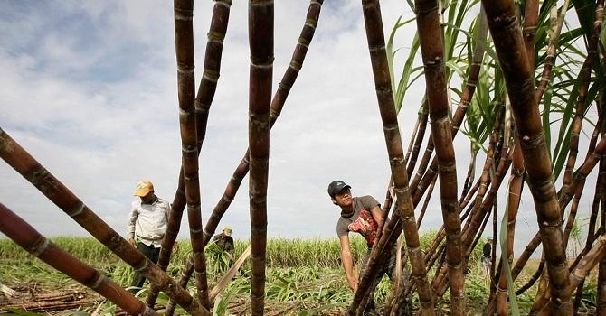 """Không tháo gỡ """"nút thắt"""" chính sách, ngành mía đường Việt Nam vẫn mãi tụt hậu"""