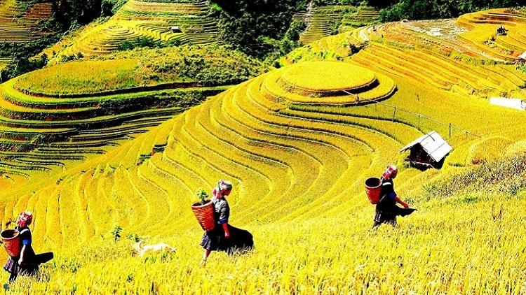 Việt Nam lọt top 10 điểm đến du lịch phát triển nhanh nhất thế giới