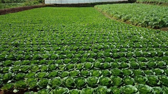 Chi tiết bộ tiêu chuẩn nông nghiệp hữu cơ quốc gia