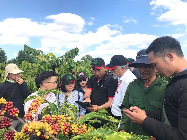 Nestlé hỗ trợ nông dân trồng cà phê lãi 40 triệu/ha/năm 1