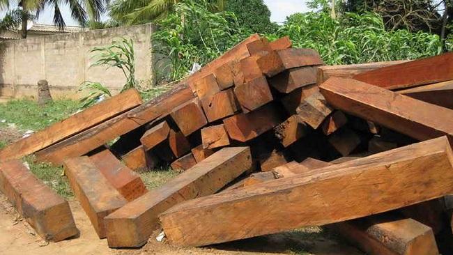 Chính phủ Lào đã số hóa ngành gỗ thế nào?