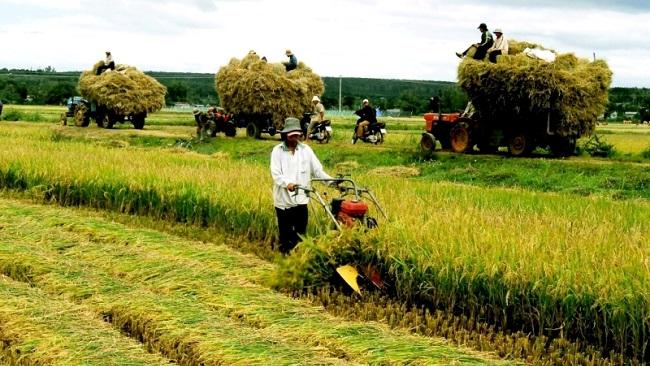 Làm sao để 'hạt gạo làng ta' vươn ra ngoài thành công? 2