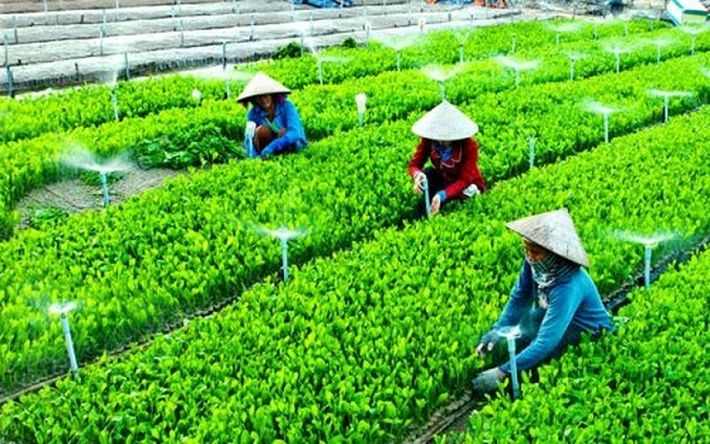 Đi tìm niềm tin cho nông sản sạch