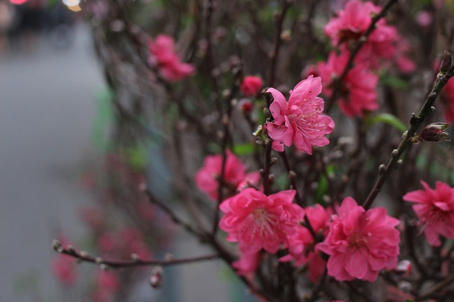 Chợ hoa phố cổ rực đỏ đón Tết Kỷ Hợi 1