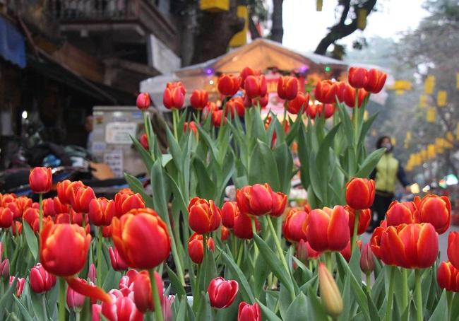 Chợ hoa phố cổ tưng bừng đón Tết Kỷ Hợi 7