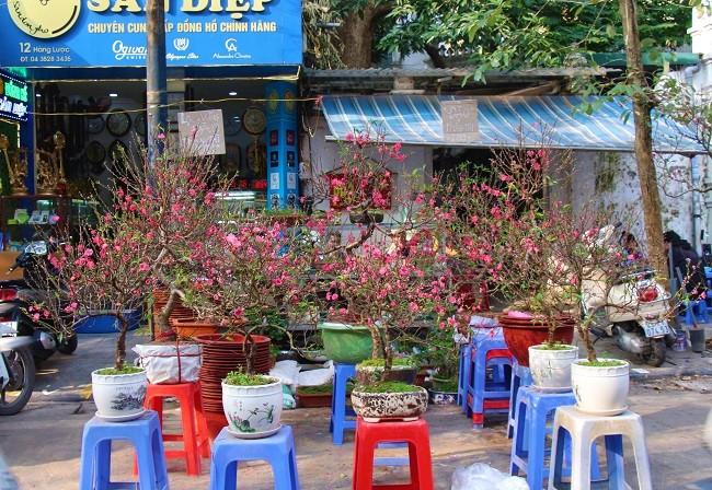 Chợ hoa phố cổ rực đỏ đón Tết Kỷ Hợi 5