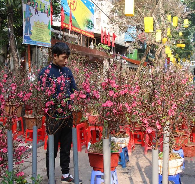 Chợ hoa phố cổ rực đỏ đón Tết Kỷ Hợi 3