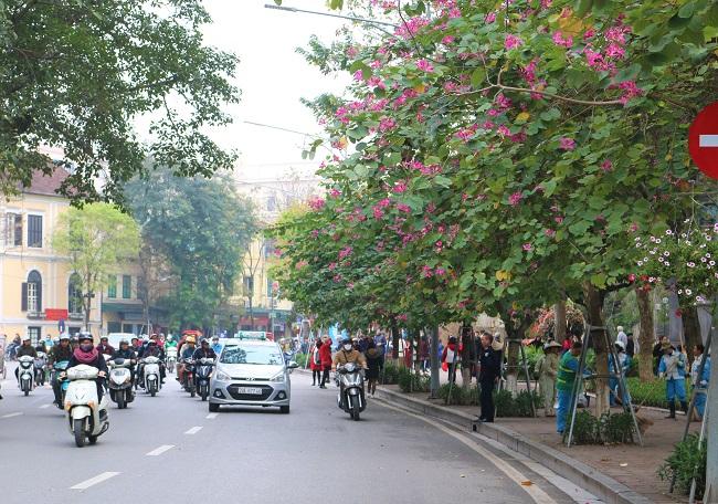 Hà Nội đẹp dịu dàng mùa thay lá 5