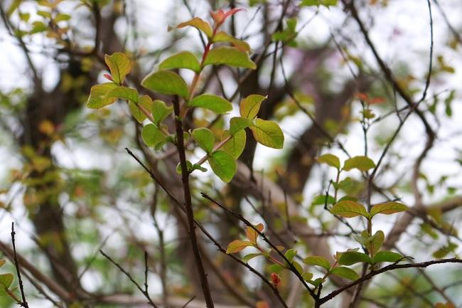 Hà Nội đẹp dịu dàng mùa thay lá 2