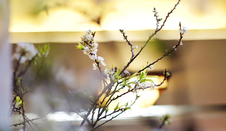 Sắc hoa ngày Tết 4
