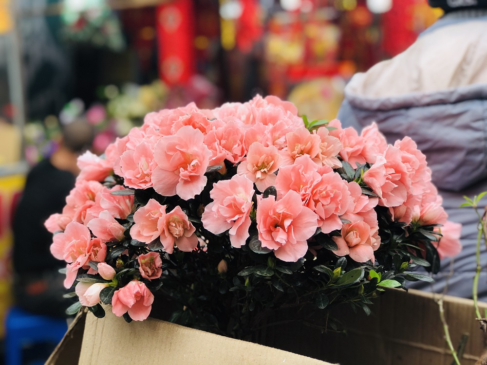 Sắc hoa ngày Tết 5
