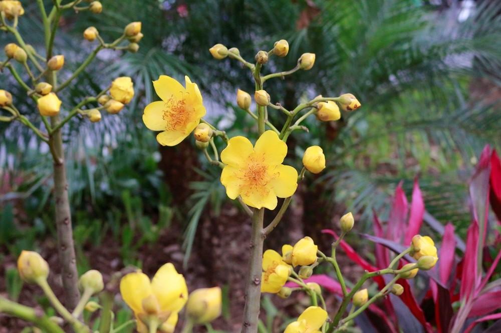 Sắc hoa ngày Tết 7