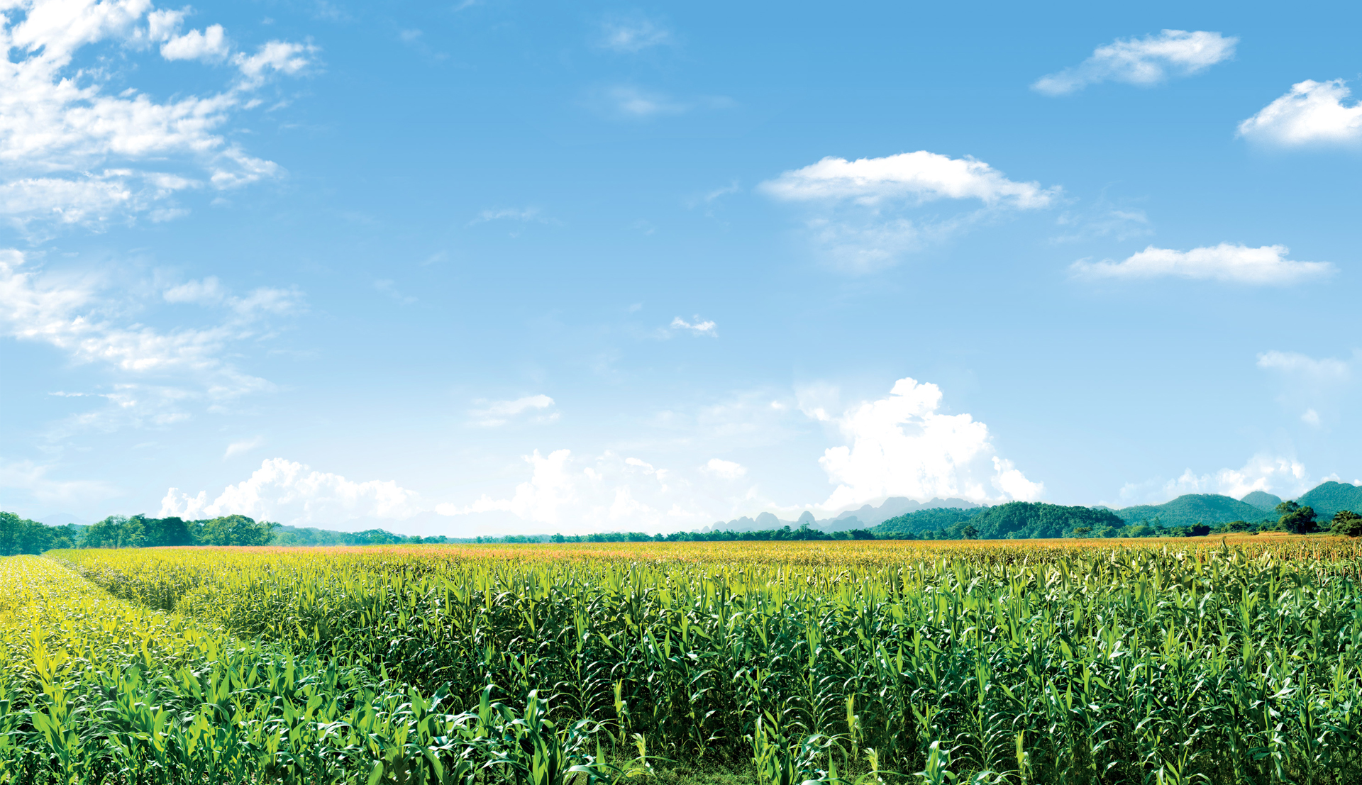 Bài toán đặt hàng của Thủ tướng cho toàn ngành nông nghiệp Việt Nam và lời giải của TH 8