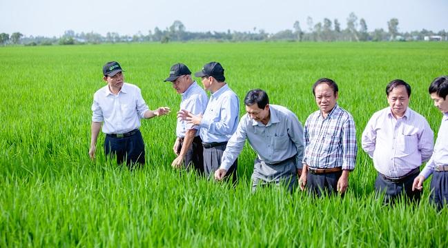 Lão nông tạo ra 'cách mạng xanh' cho cây lúa 1