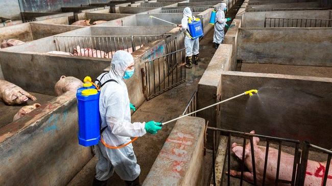 Khả năng hỗ trợ cấp đông thịt lợn của doanh nghiệp là có hạn