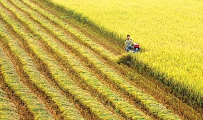 'Không cứng nhắc duy trì xuất khẩu gạo ở ĐBSCL với số lượng lớn'