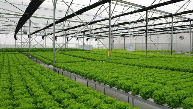 Nông nghiệp Việt lọt top 15 nước phát triển nhất thế giới vào năm 2030