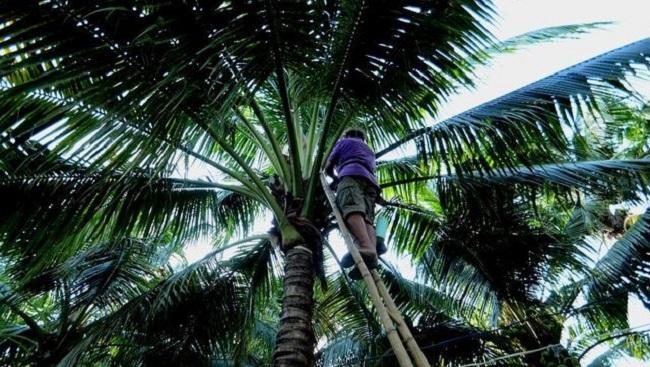Học nông dân Thái làm du lịch 1