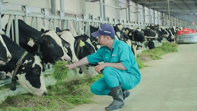 """Đến Tây Ninh nghe chuyện về """"Resort"""" bò sữa 4.0 2"""
