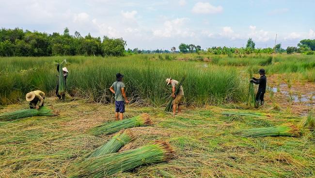 Biến cỏ dại thành hàng xuất khẩu với tham vọng doanh thu 500 tỷ đồng 2
