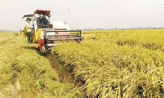 Vòng nguyệt quế cho hạt gạo làng ta 2