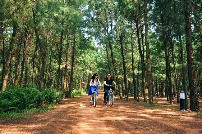 Những rừng thông đẹp nhất miền Bắc Việt Nam 1