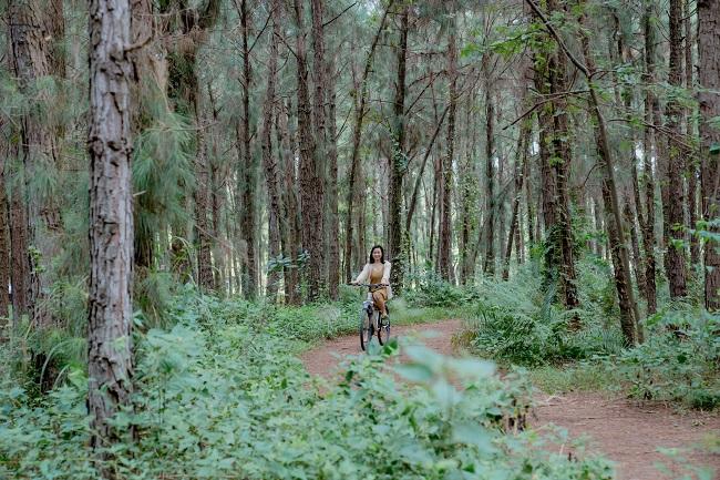 Những rừng thông đẹp nhất miền Bắc Việt Nam 4