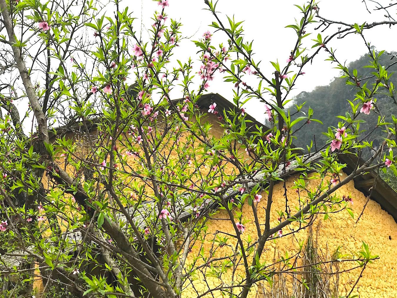 Ngất ngây hương vị Xuân nơi đá nở hoa 3