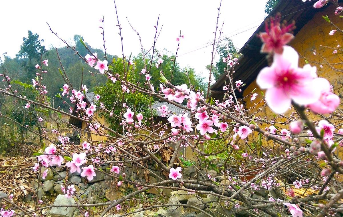 Ngất ngây hương vị Xuân nơi đá nở hoa 1