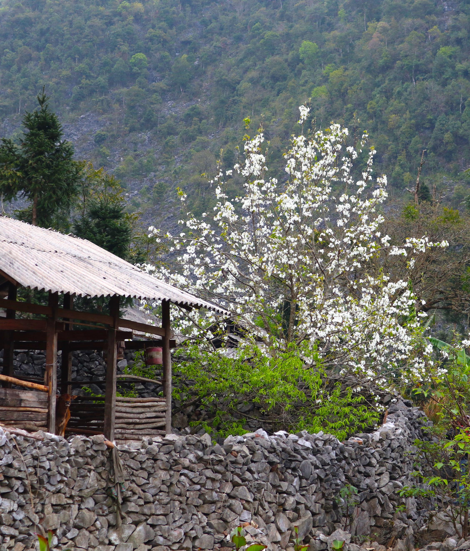 Ngất ngây hương vị Xuân nơi đá nở hoa 6