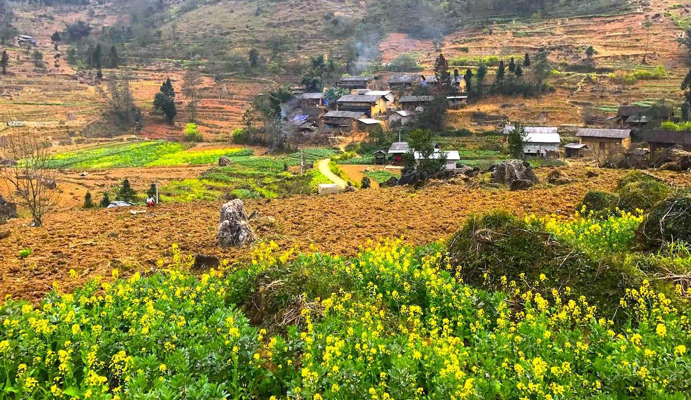 Ngất ngây hương vị Xuân nơi đá nở hoa 4