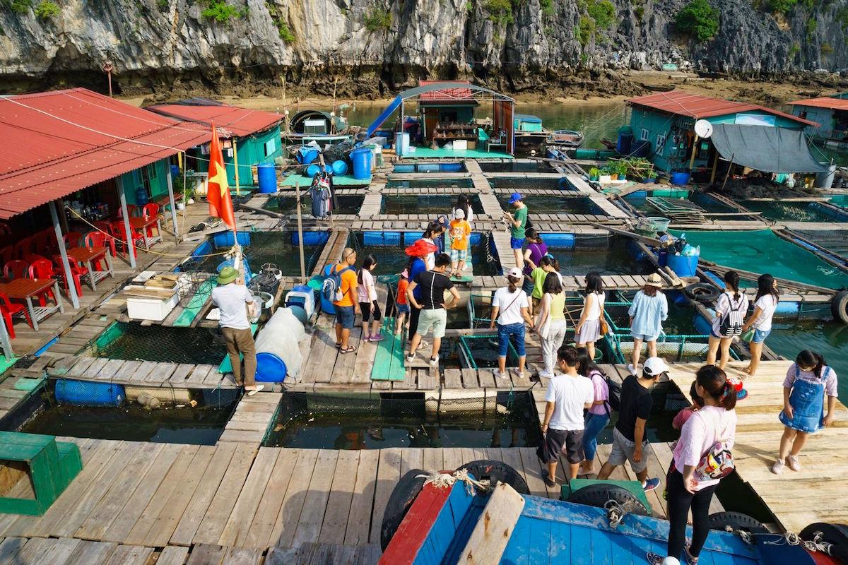 10 điều thú vị khiến du khách thích khám phá vịnh Lan Hạ hơn vịnh Hạ Long 12