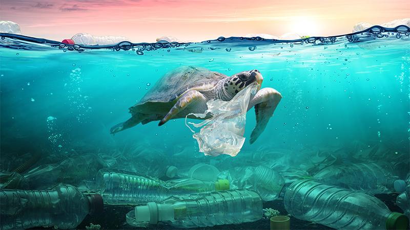 Ô nhiễm rác nhựa: Đừng đổ tại bao bì 1